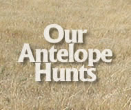 our antelope hunts